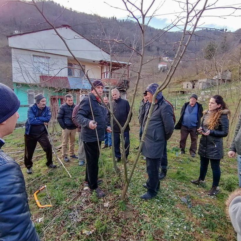 HAZELNUT PLANTING AND PRUNING TRAINING