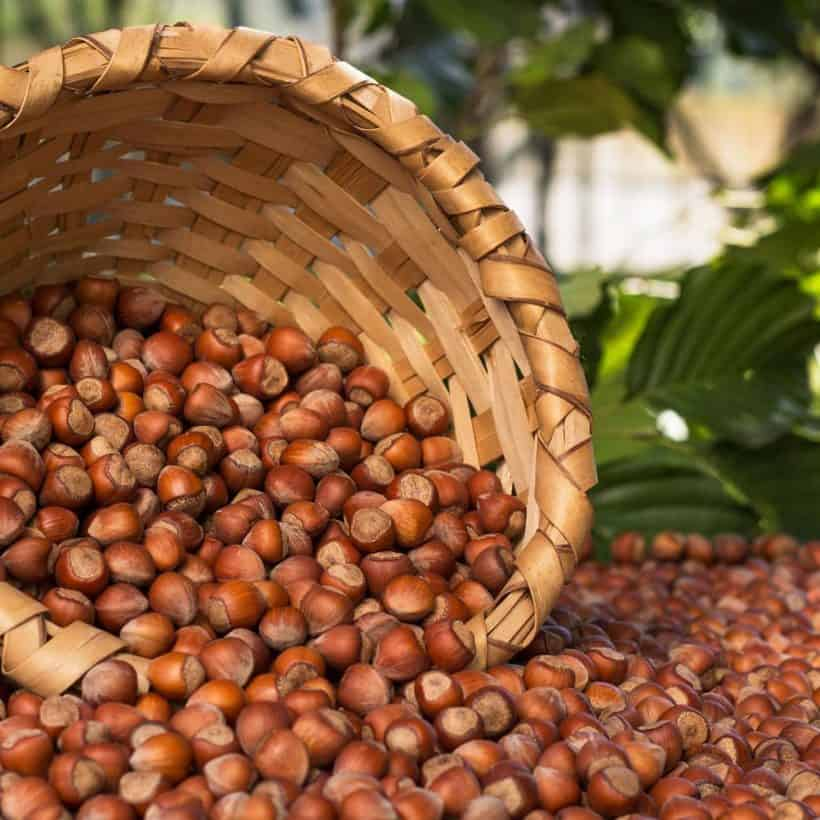 2020 APRIL HAZELNUT MARKET REPORT